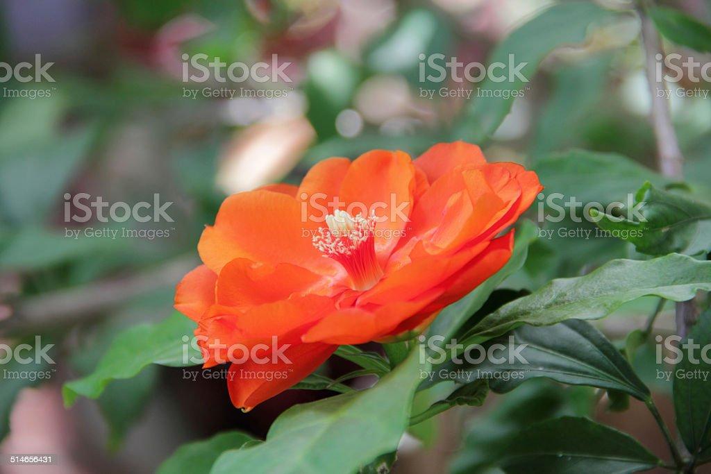 open flower stock photo
