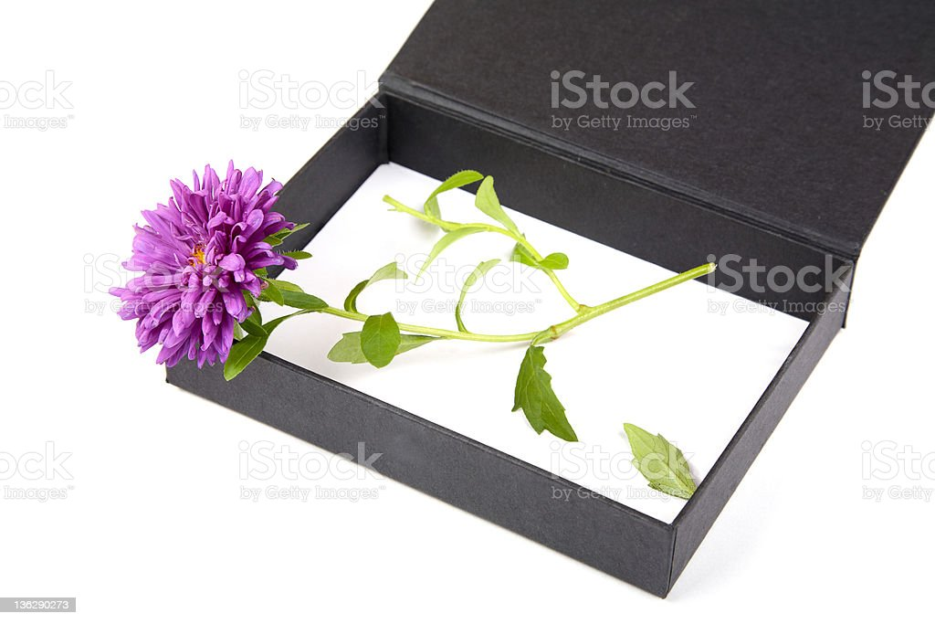 Open gift box with  flower isolated royalty-free stock photo