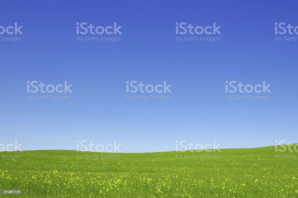 Open green fields and blue sky stock photo