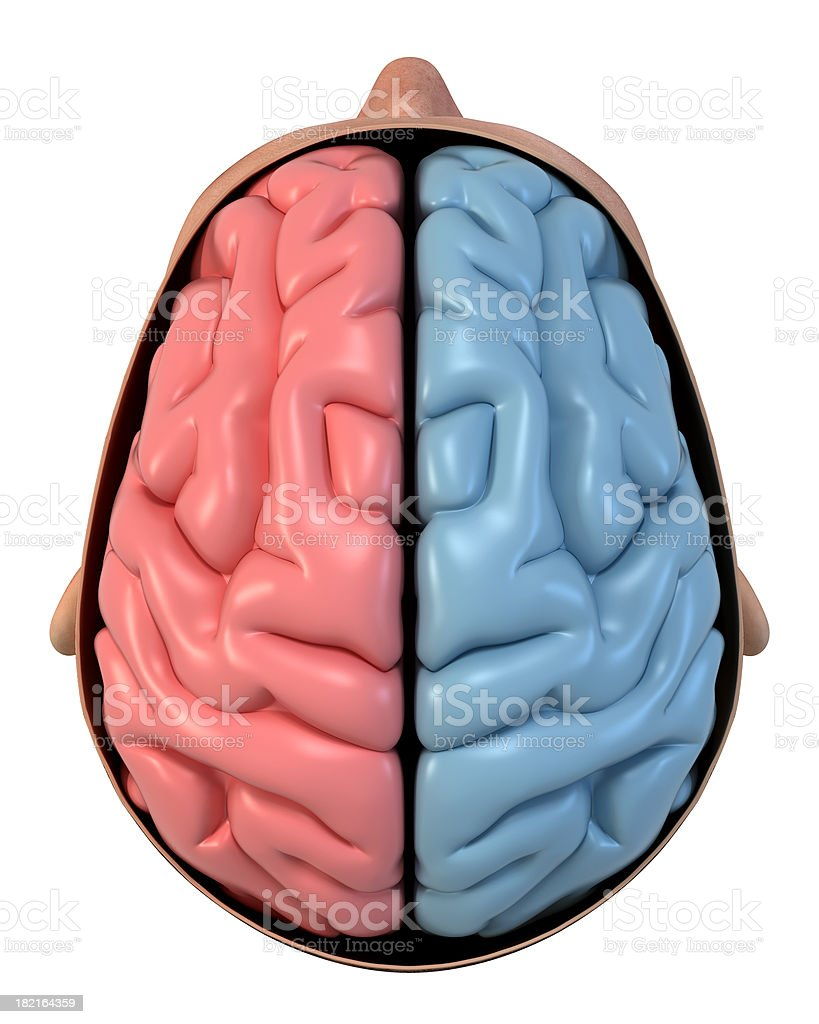 Open head from above, showing two hemispheres of the brain royalty-free stock photo