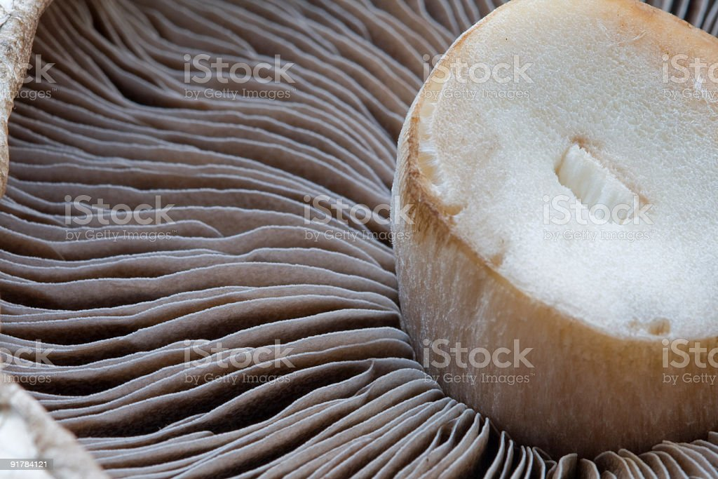Open Mushroom Macro (Horizontal) stock photo