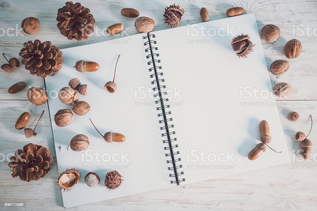 open notebook with acorns and cones stock photo