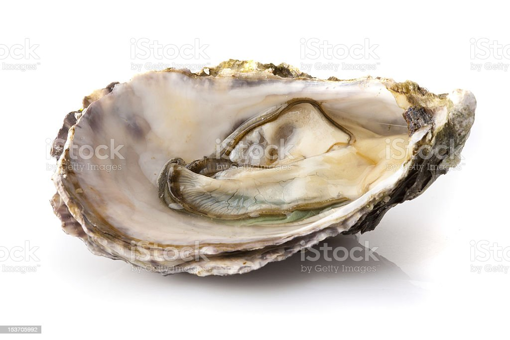Open oyster stock photo