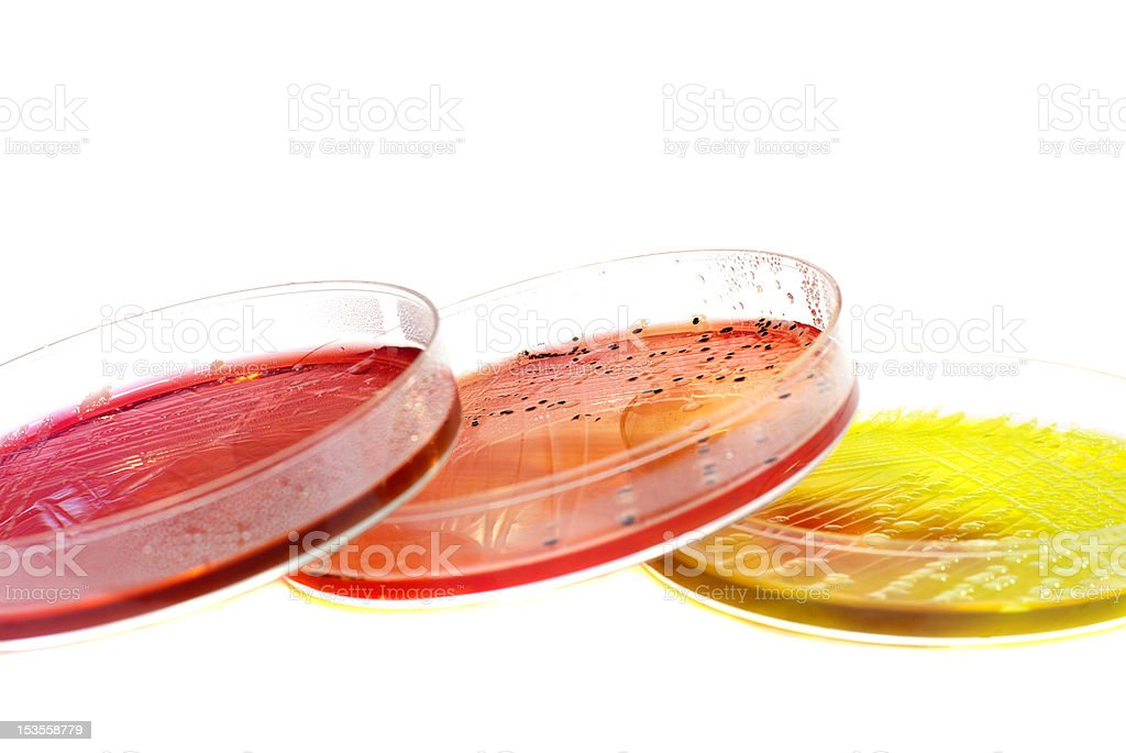 open petri dish with agar jelly overlapping isolated on white royalty-free stock photo