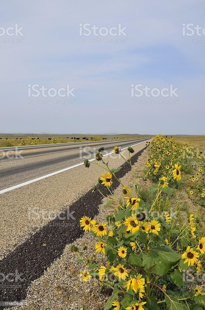 Open Road, Montana royalty-free stock photo