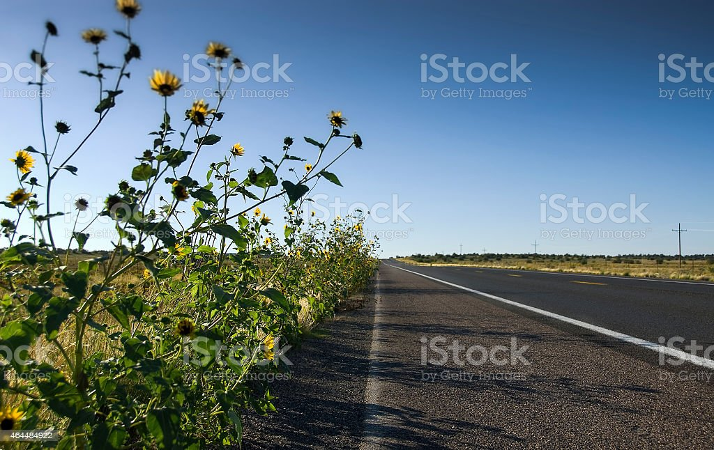 open road with wild flowers stock photo
