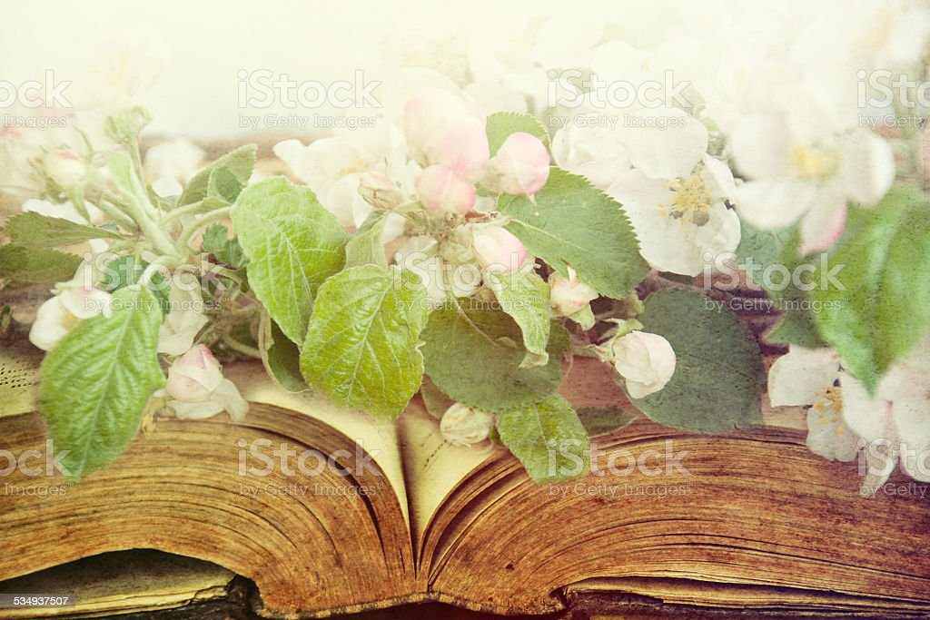 Open vintage book with blossom branch. stock photo