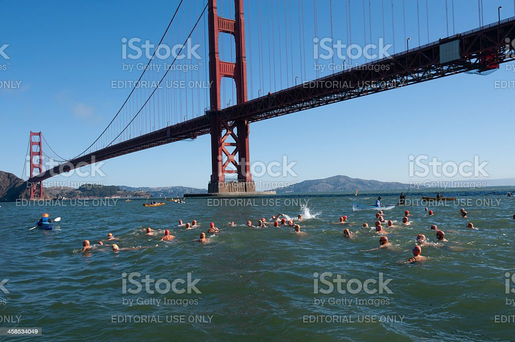 Open water swimmers at Golden Gate royalty-free stock photo