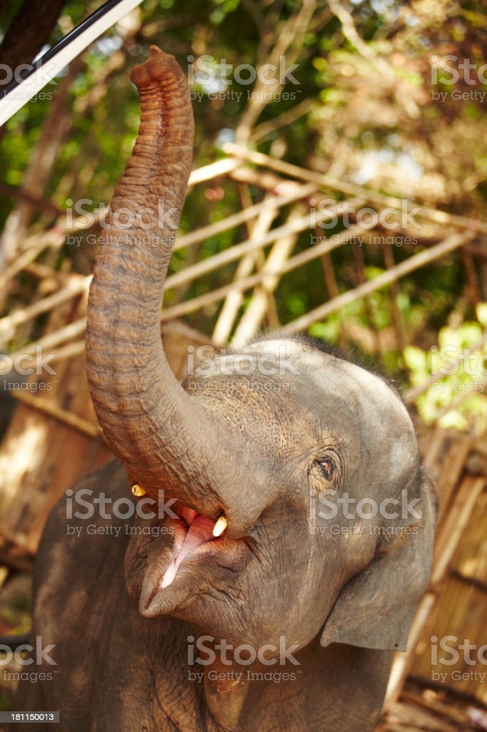 Open wide! royalty-free stock photo