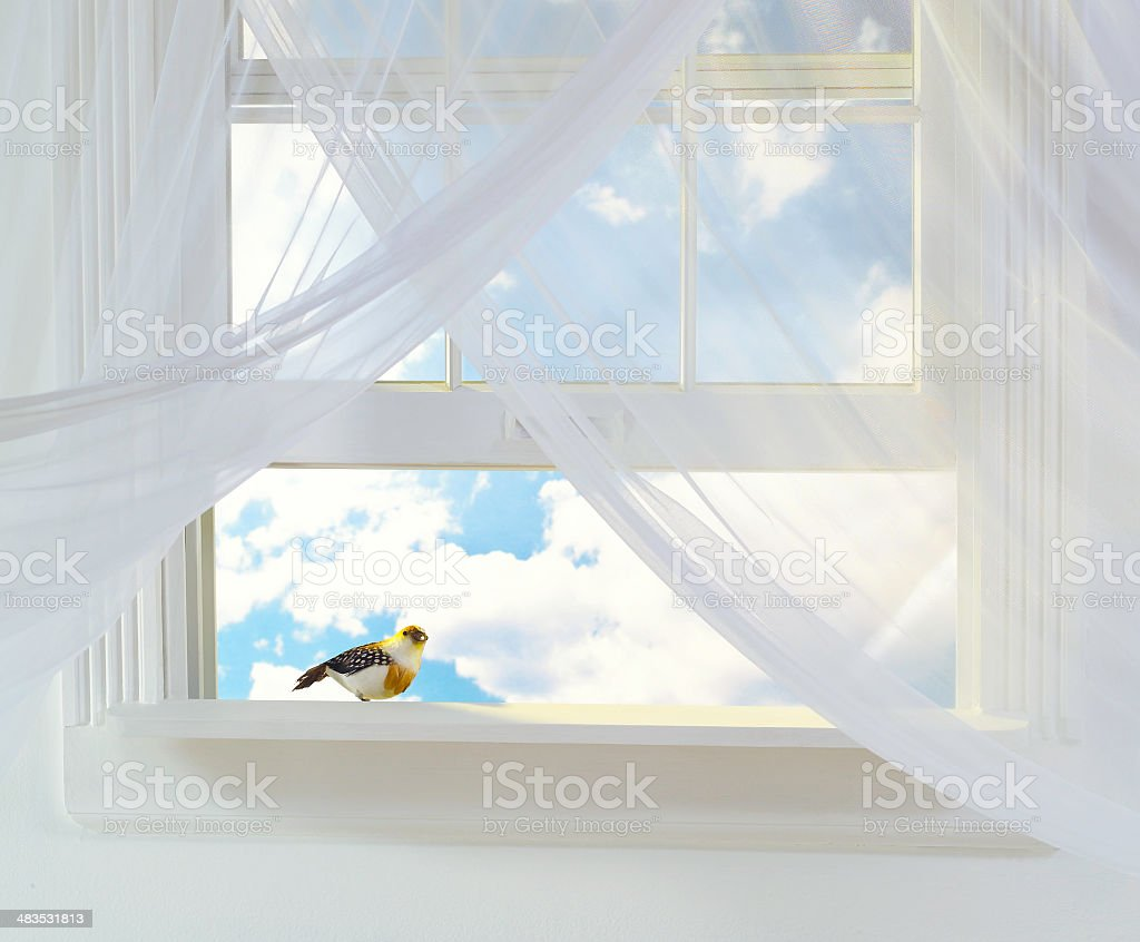 Open window with bird on sill with clouded sky background stock photo