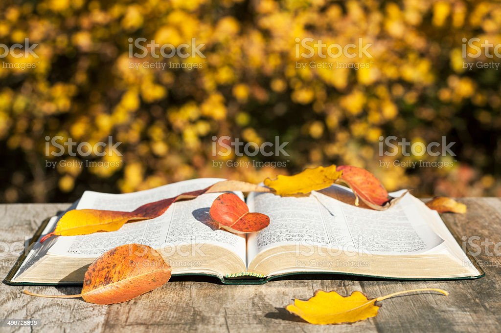 Opened book and autumn leaves stock photo