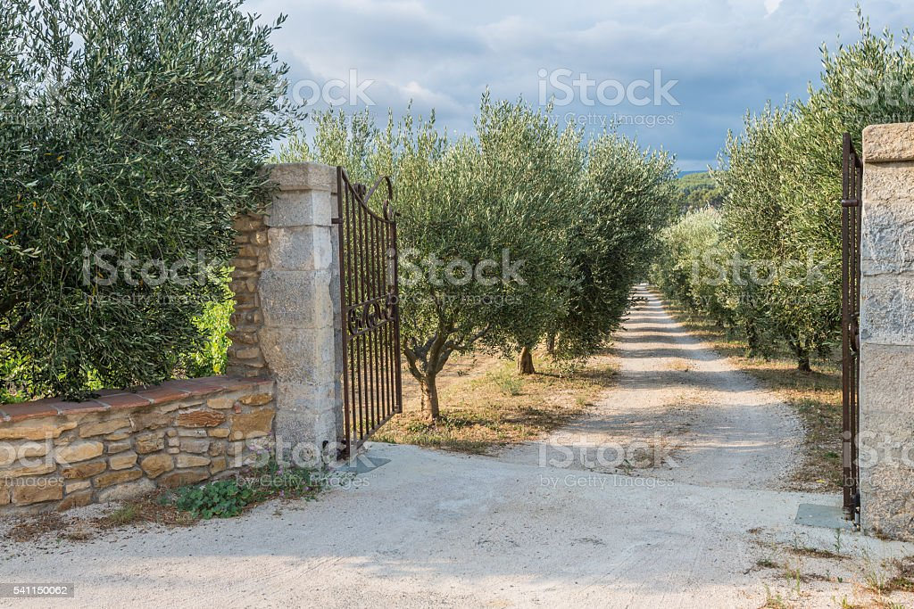Opened gates are inviting to the beautiful olive garden stock photo