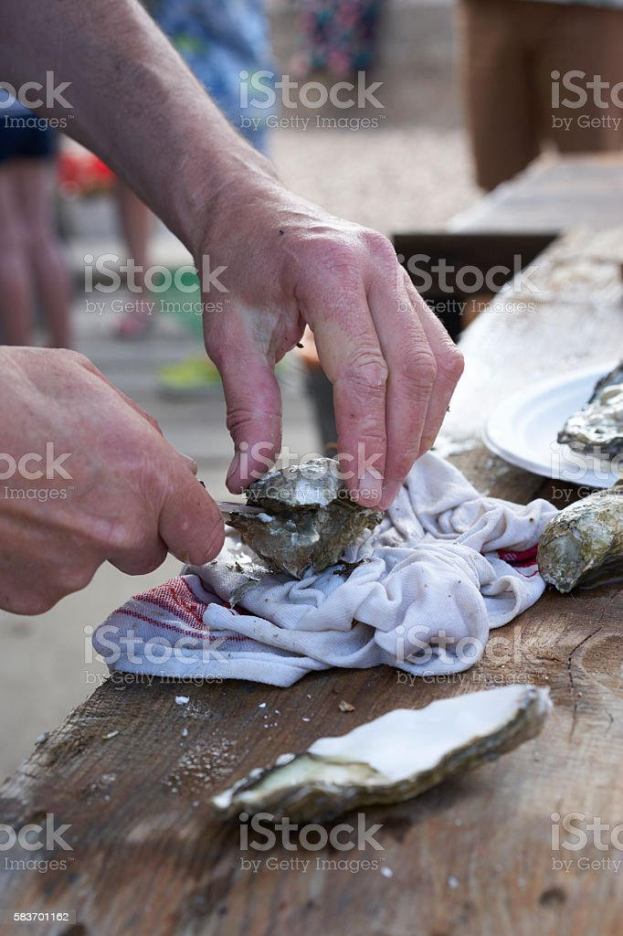 Opening an Oyster stock photo