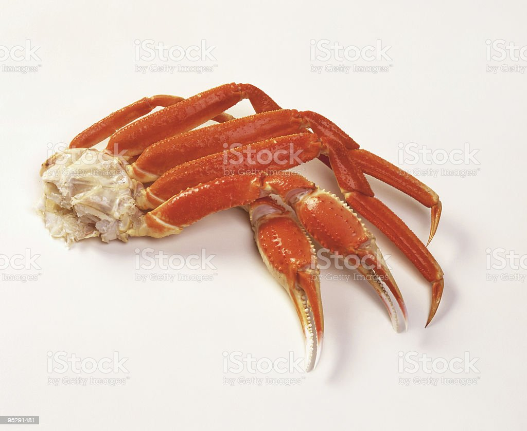 Opilio Snow Crab Cooked Legs on White stock photo