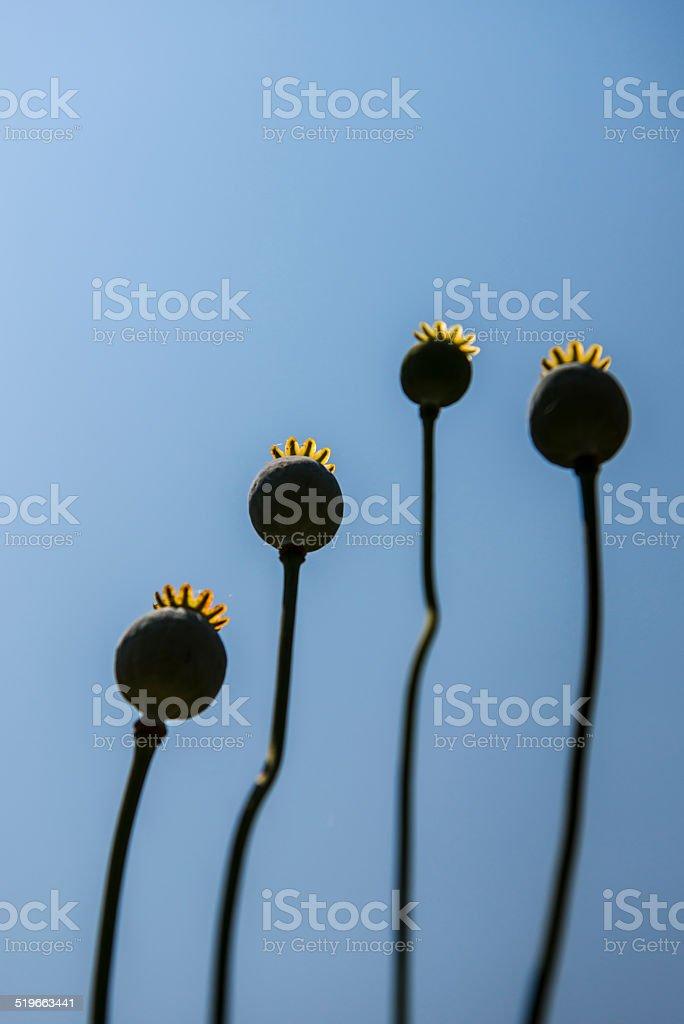 Opium Head stock photo