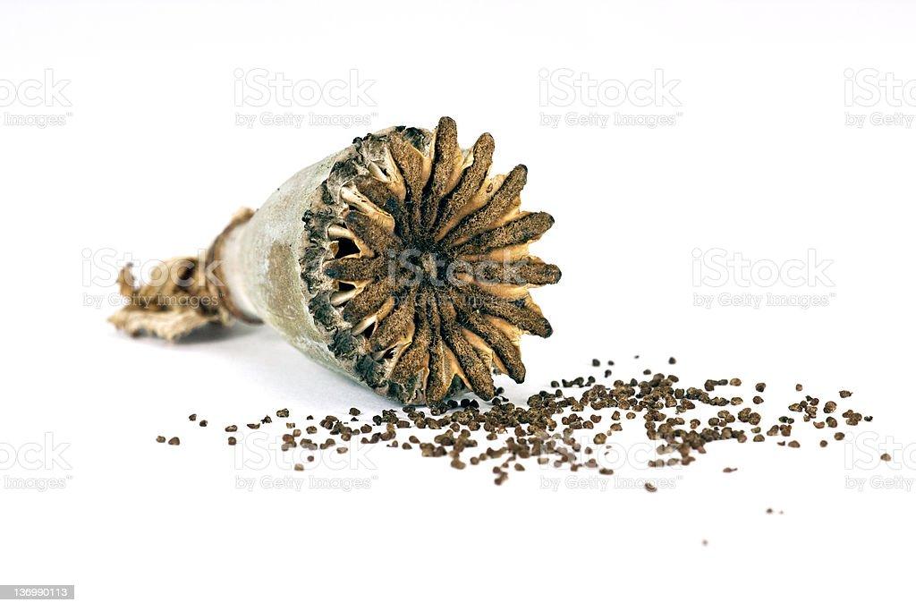 Opium poppy seed stock photo