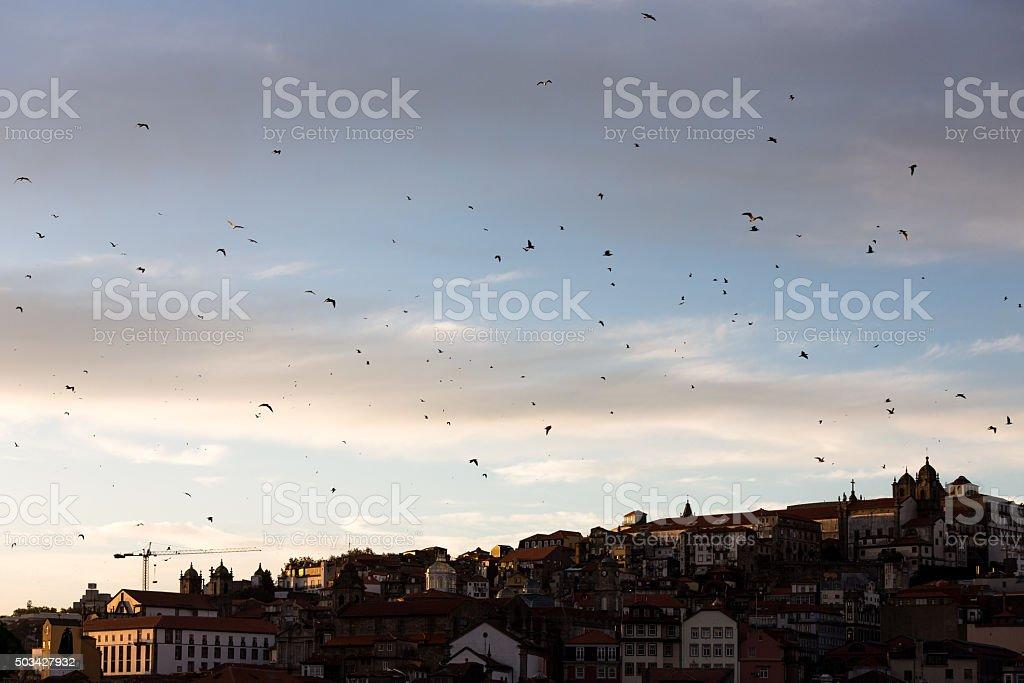 Oporto City stock photo