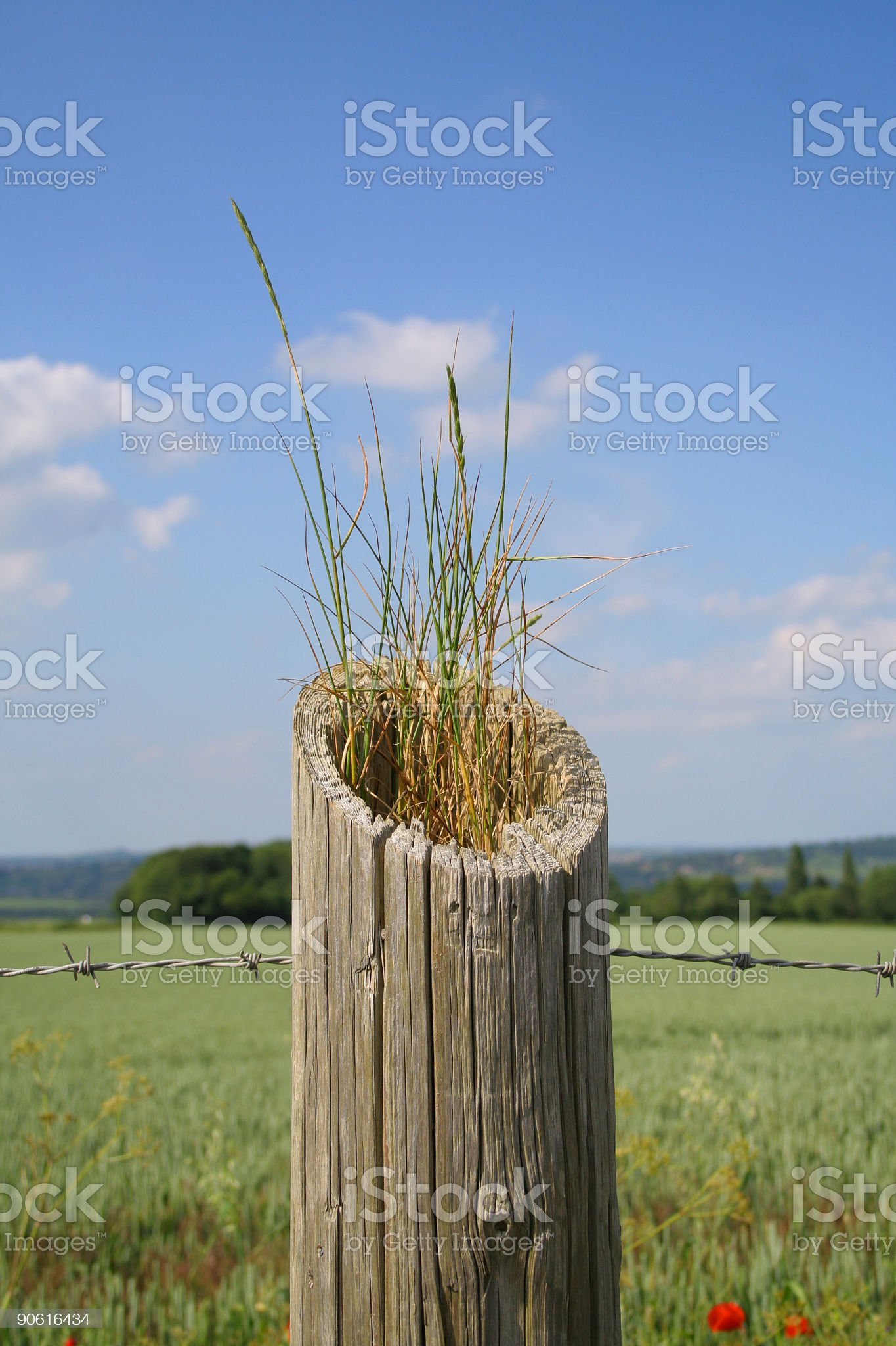 Opportunism royalty-free stock photo