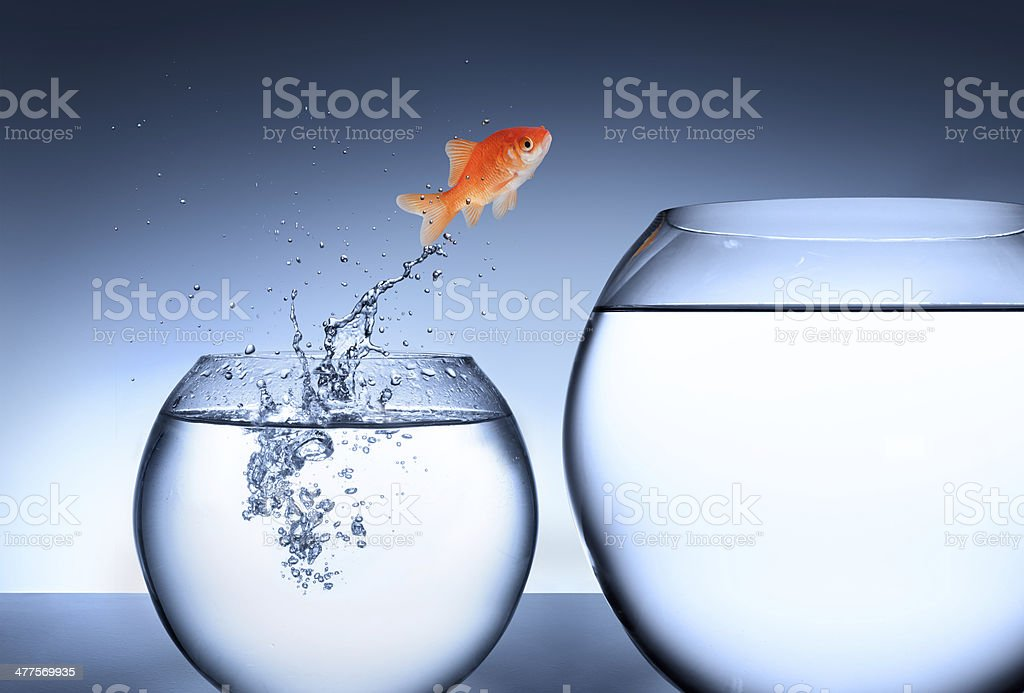 Opportunity, rise and improvement concept stock photo