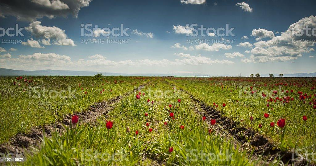 Oppressed flowers royalty-free stock photo