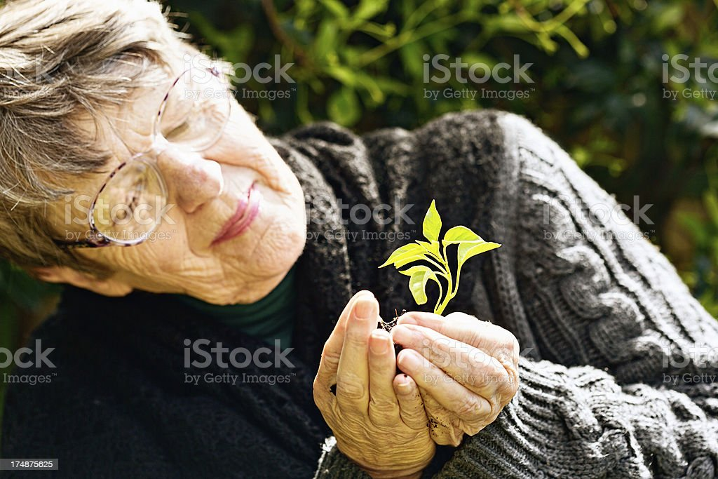 Optimistic old woman smiles at healthy seedling she holds royalty-free stock photo