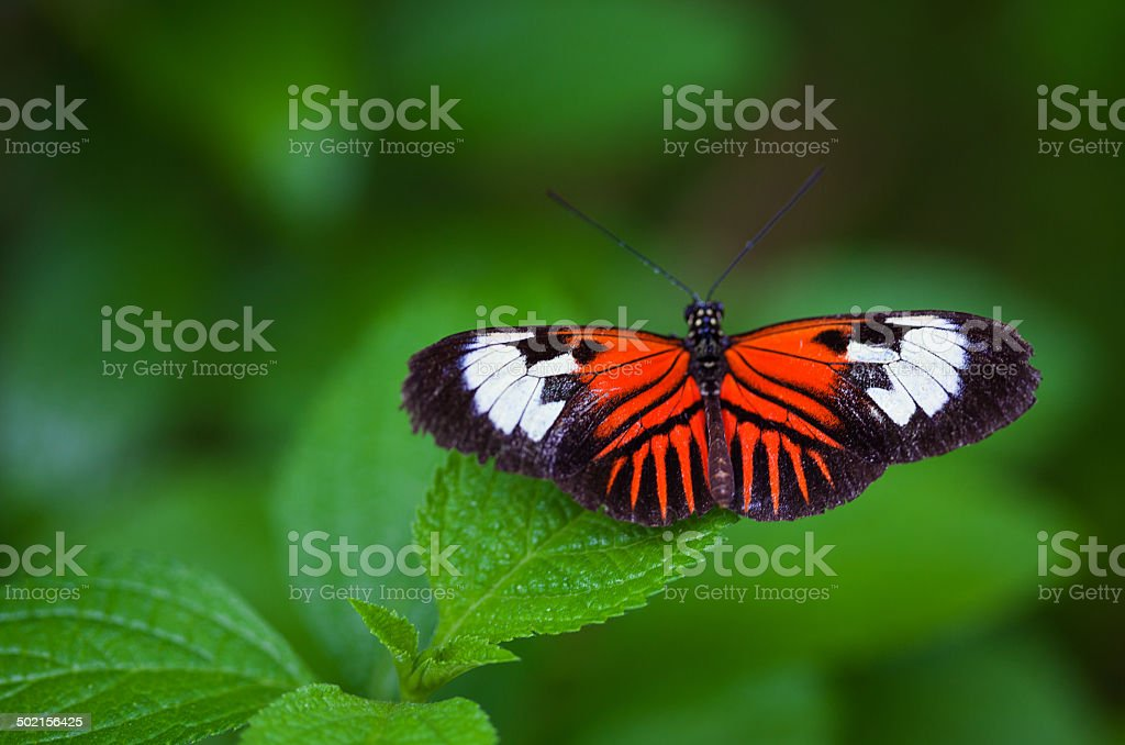 Orange and Black Butterfly stock photo