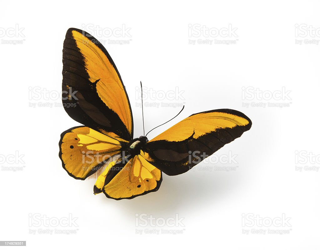 Orange and black patterned butterfly stock photo