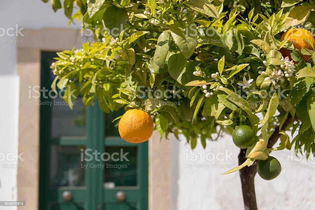 Orange and blossom on an orange tree stock photo