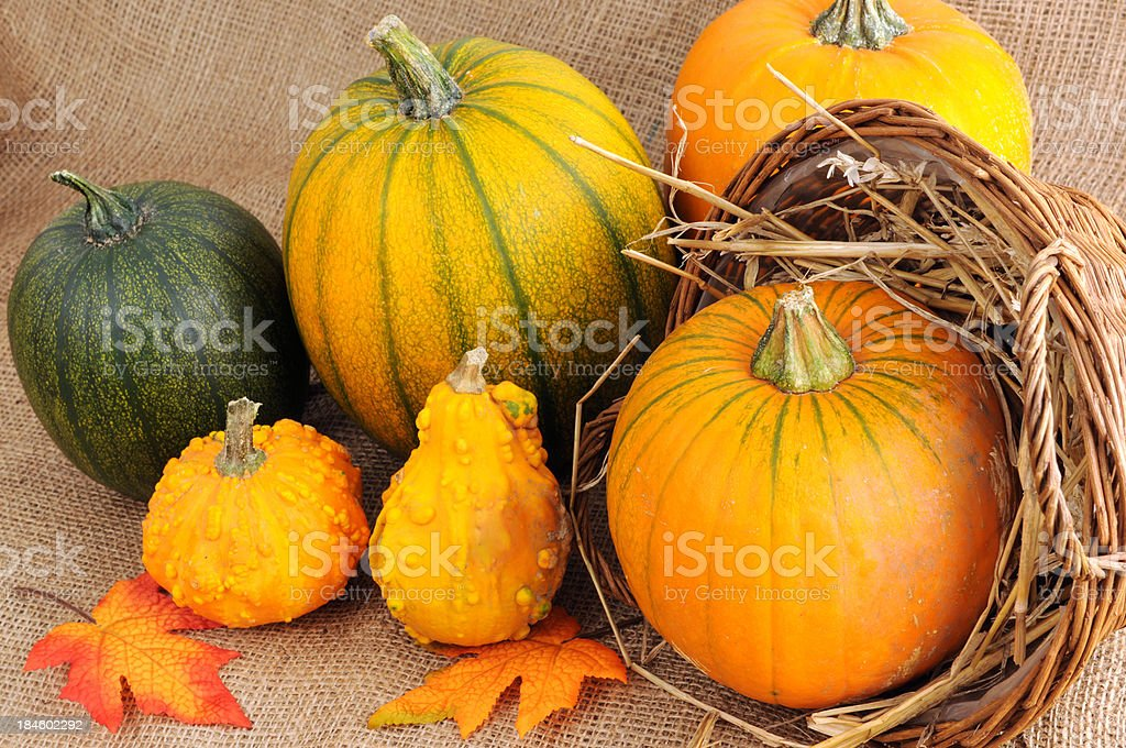 Orange and green pumpkins with a wooden basket stock photo