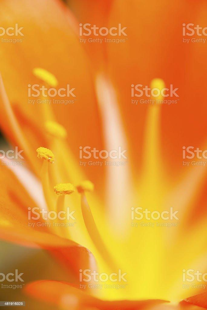Orange and Lemon stock photo