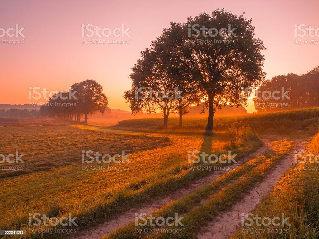 Orange and Pink Sunrise over Rural Landscape near Nijmegen stock photo