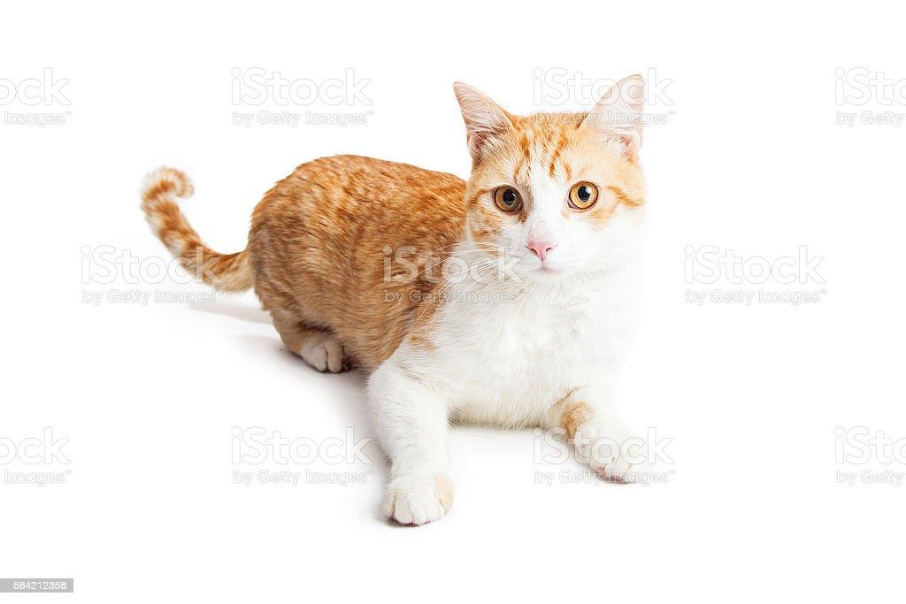 Orange and White Kitty Laying on White stock photo