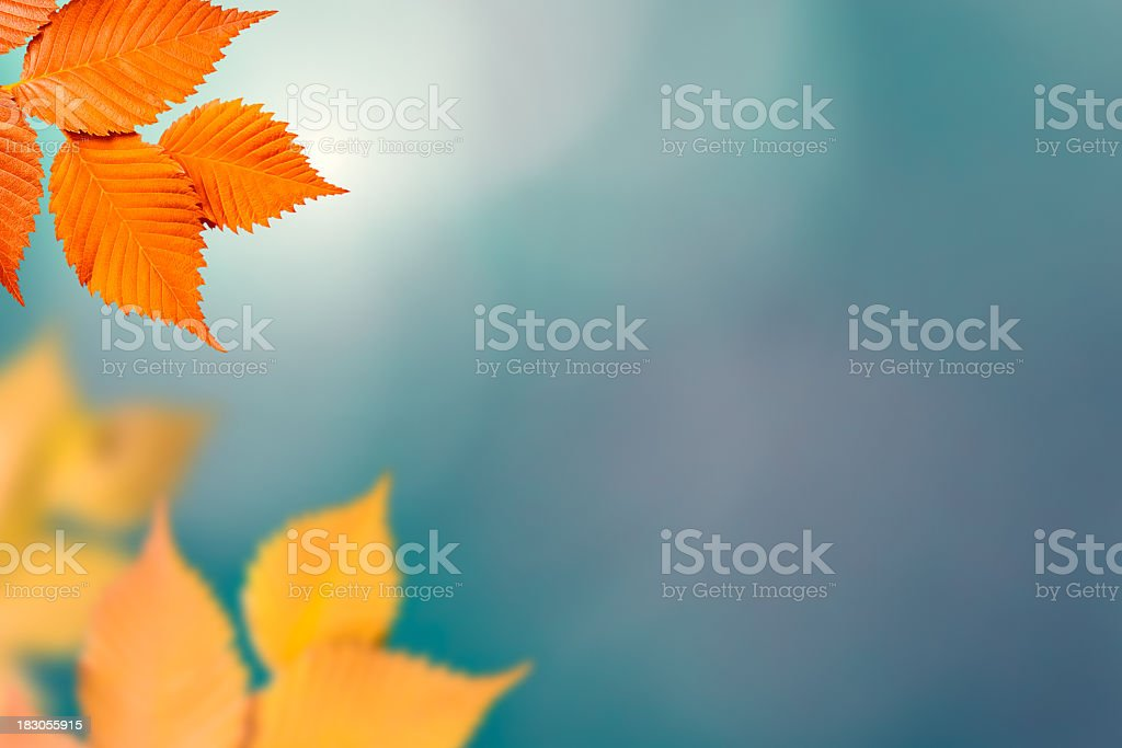 Orange and yellow autumn foliage on out of focus background royalty-free stock photo