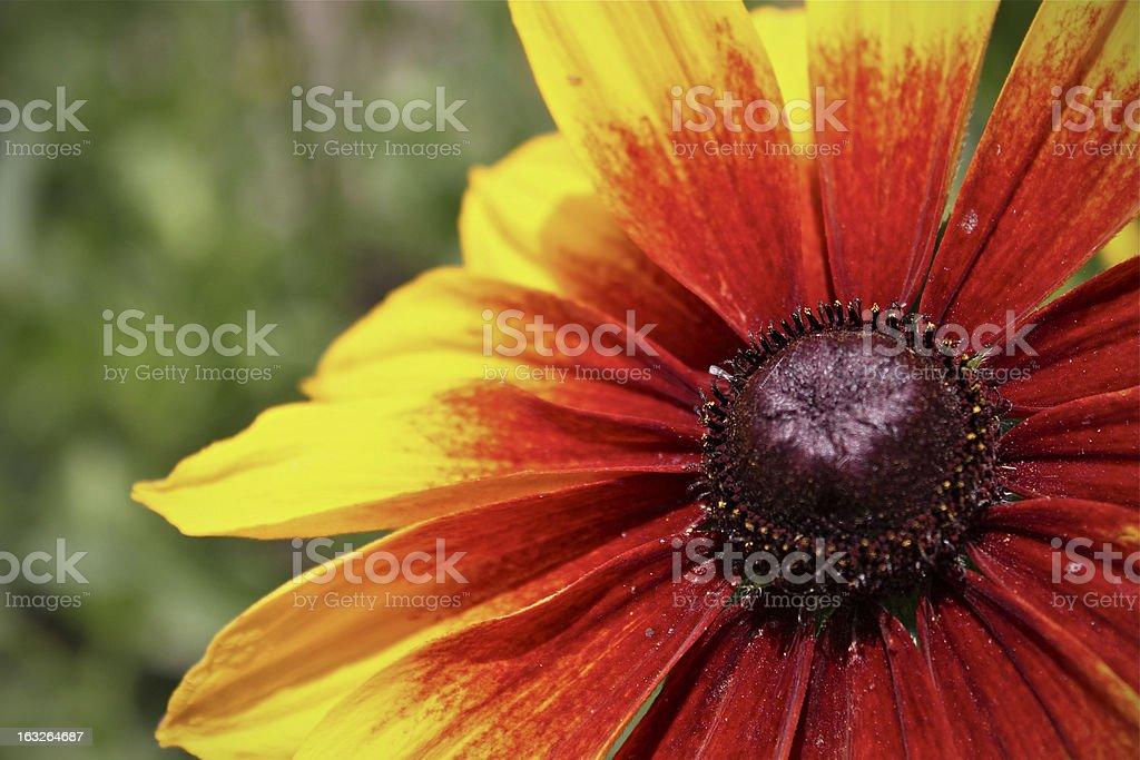 orange and yellow flower stock photo