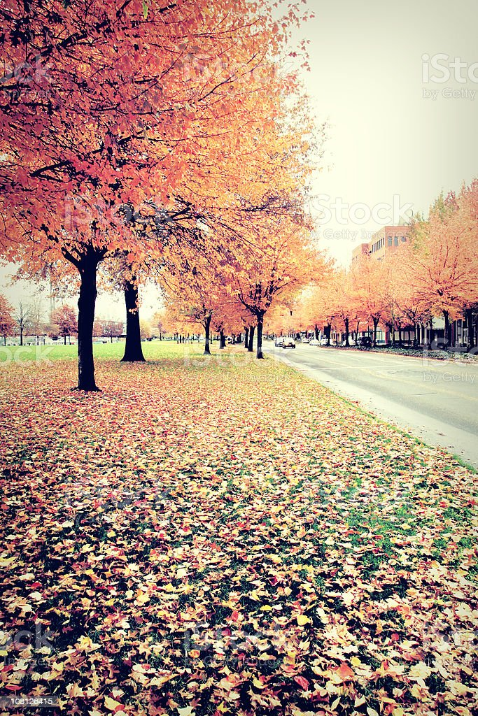 Orange Autumn Leaves royalty-free stock photo
