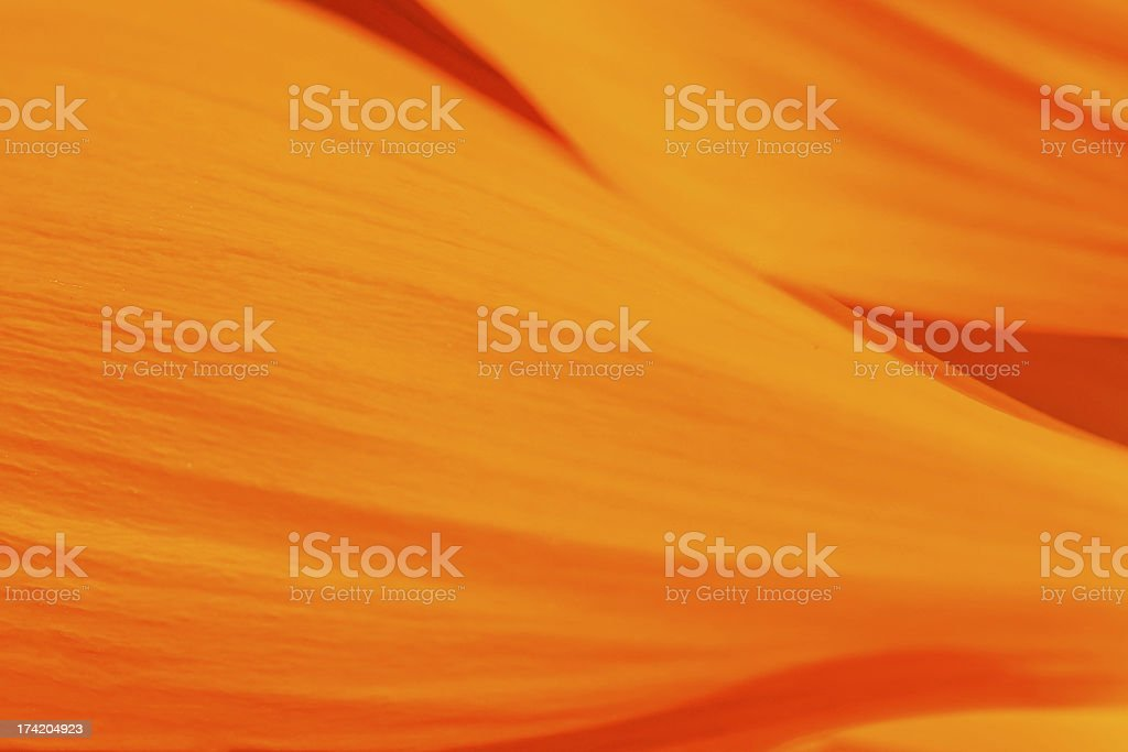 orange Background made from petals stock photo