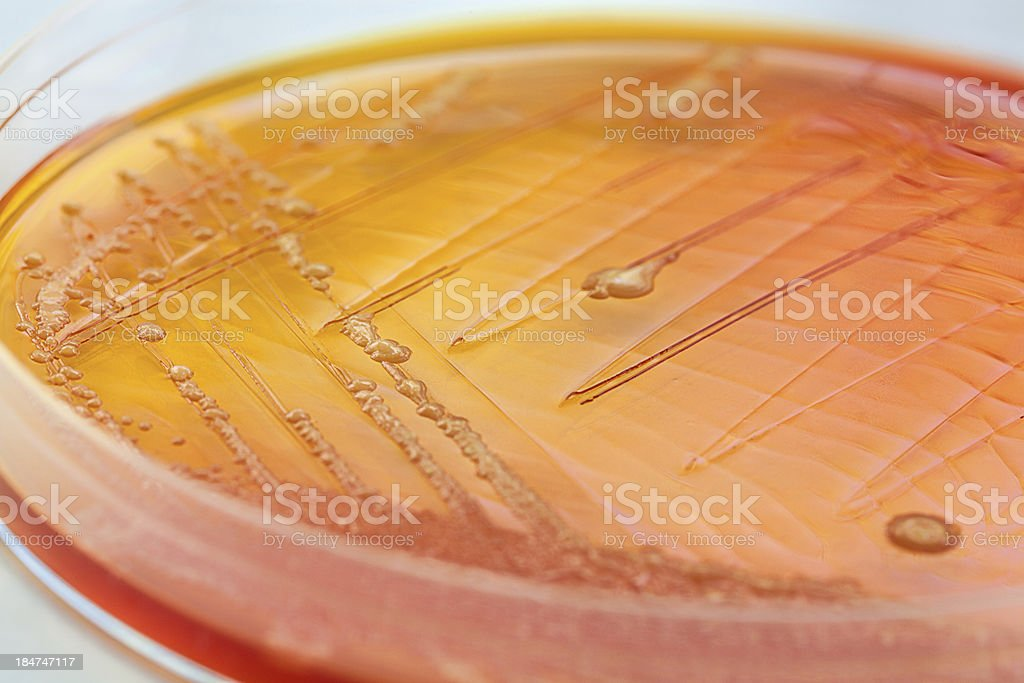 Orange bacteria royalty-free stock photo