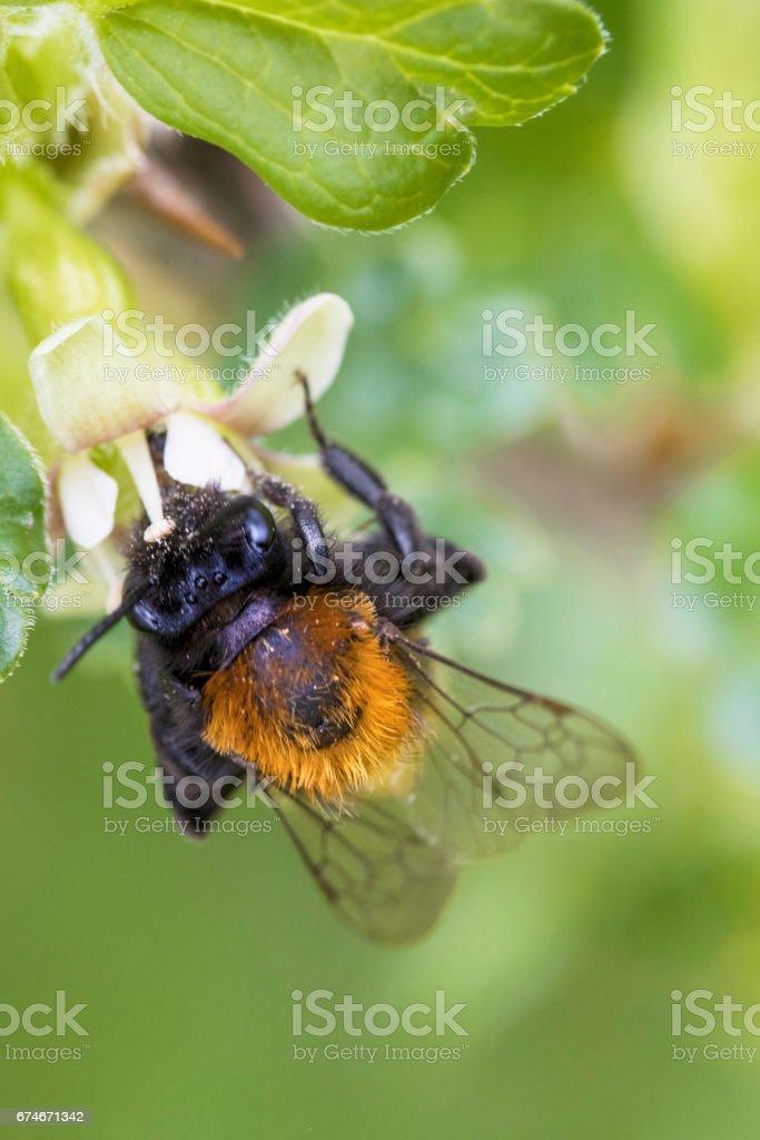 Orange bee stock photo