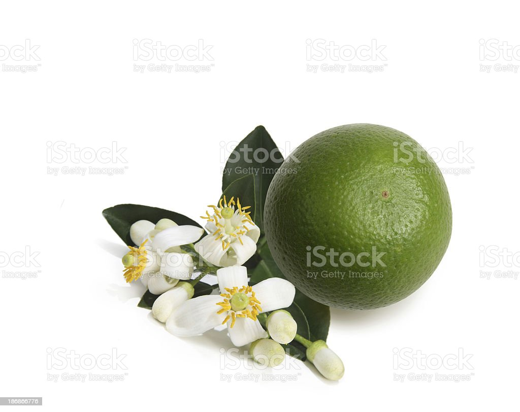 Orange Blossoms royalty-free stock photo
