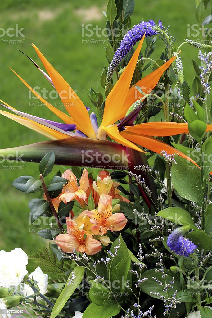 Orange, blue and white flower arrangement in grass royalty-free stock photo