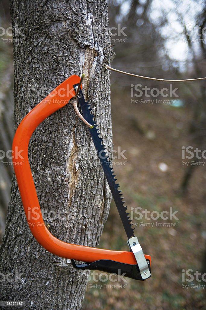Orange bucksaw stock photo