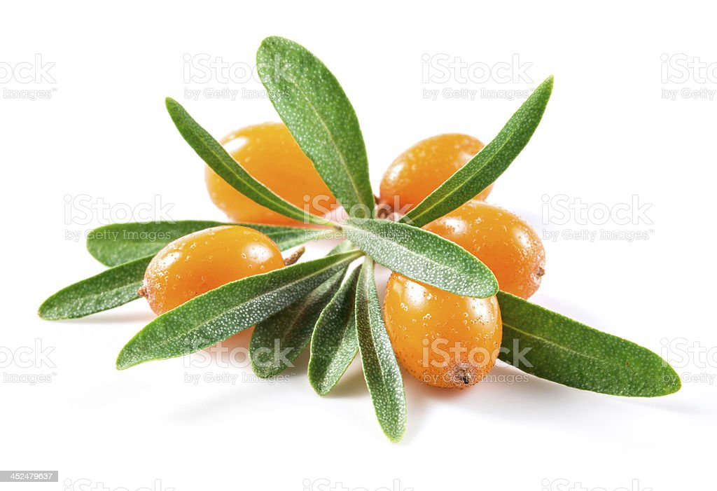Orange buckthorn berries with green leaves stock photo