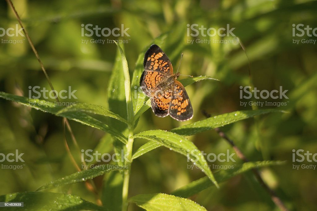 Orange Butterfly in the Grass royalty-free stock photo