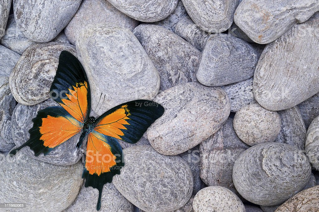 Orange butterfly on pebbles royalty-free stock photo