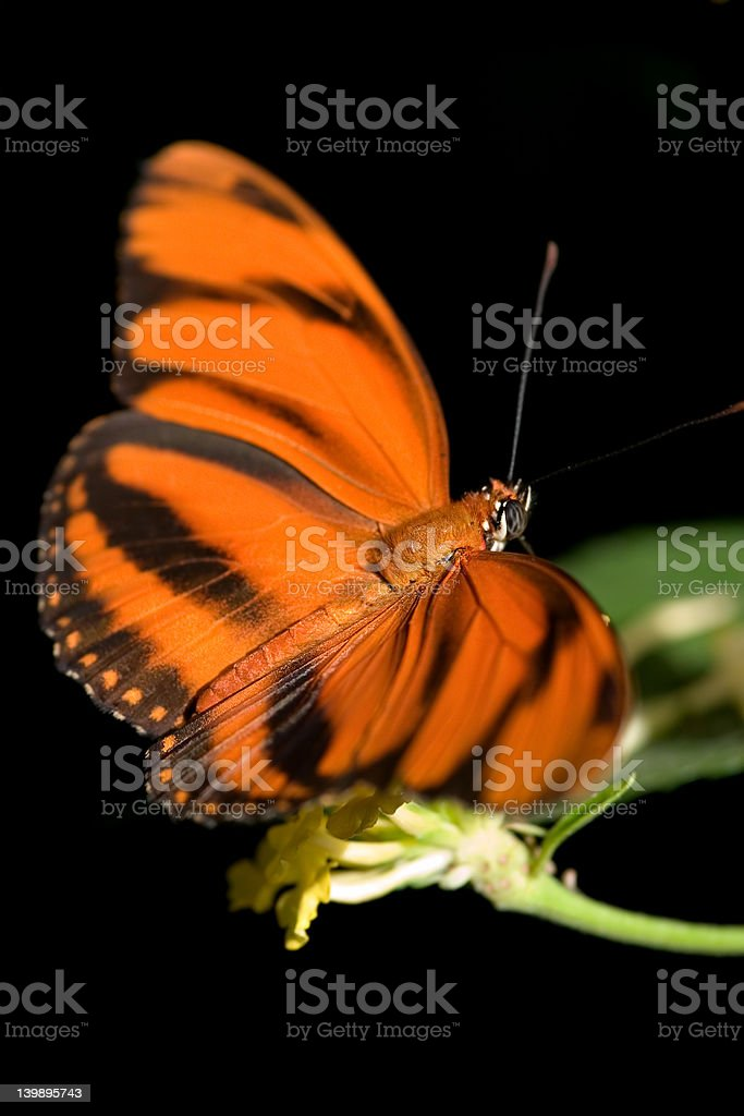 Orange butterfly stock photo