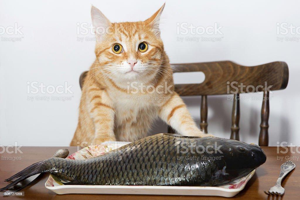 Hasil gambar untuk cat and fish