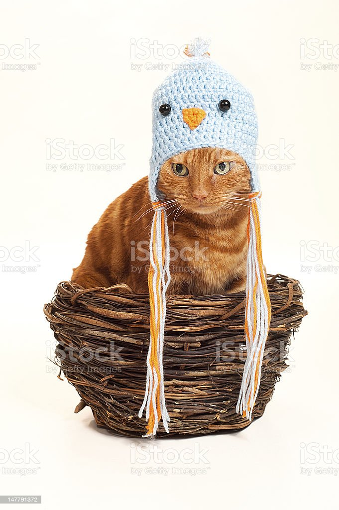 Orange Cat in an Oversized Nest Disguised as a Bird stock photo