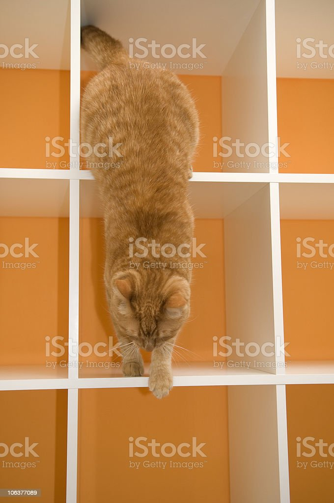 Orange Cat Leaving His New Home royalty-free stock photo
