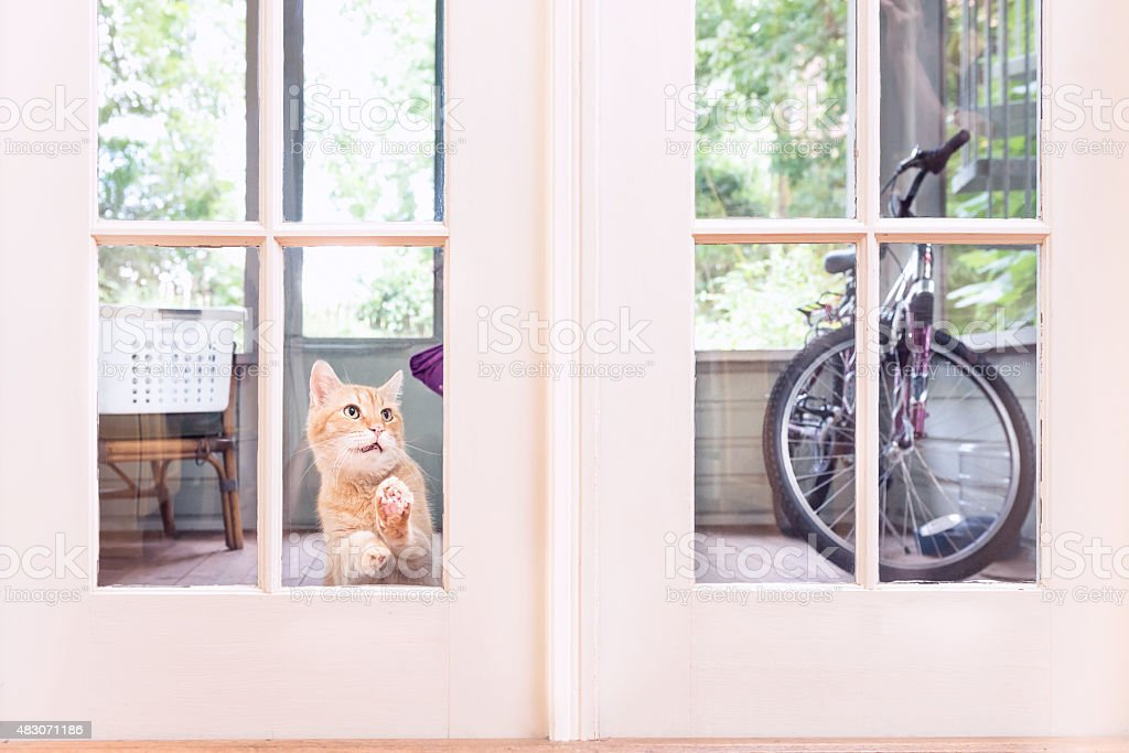 Orange Cat Looking in Window of House from the Outside stock photo