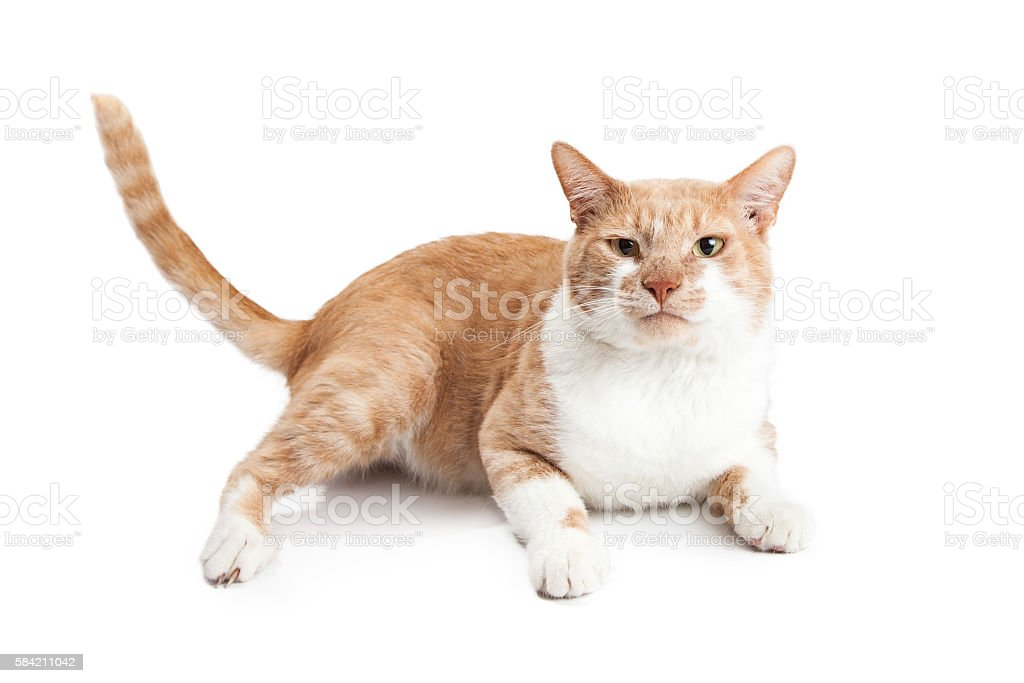 Orange Cat With Funny Face Laying stock photo